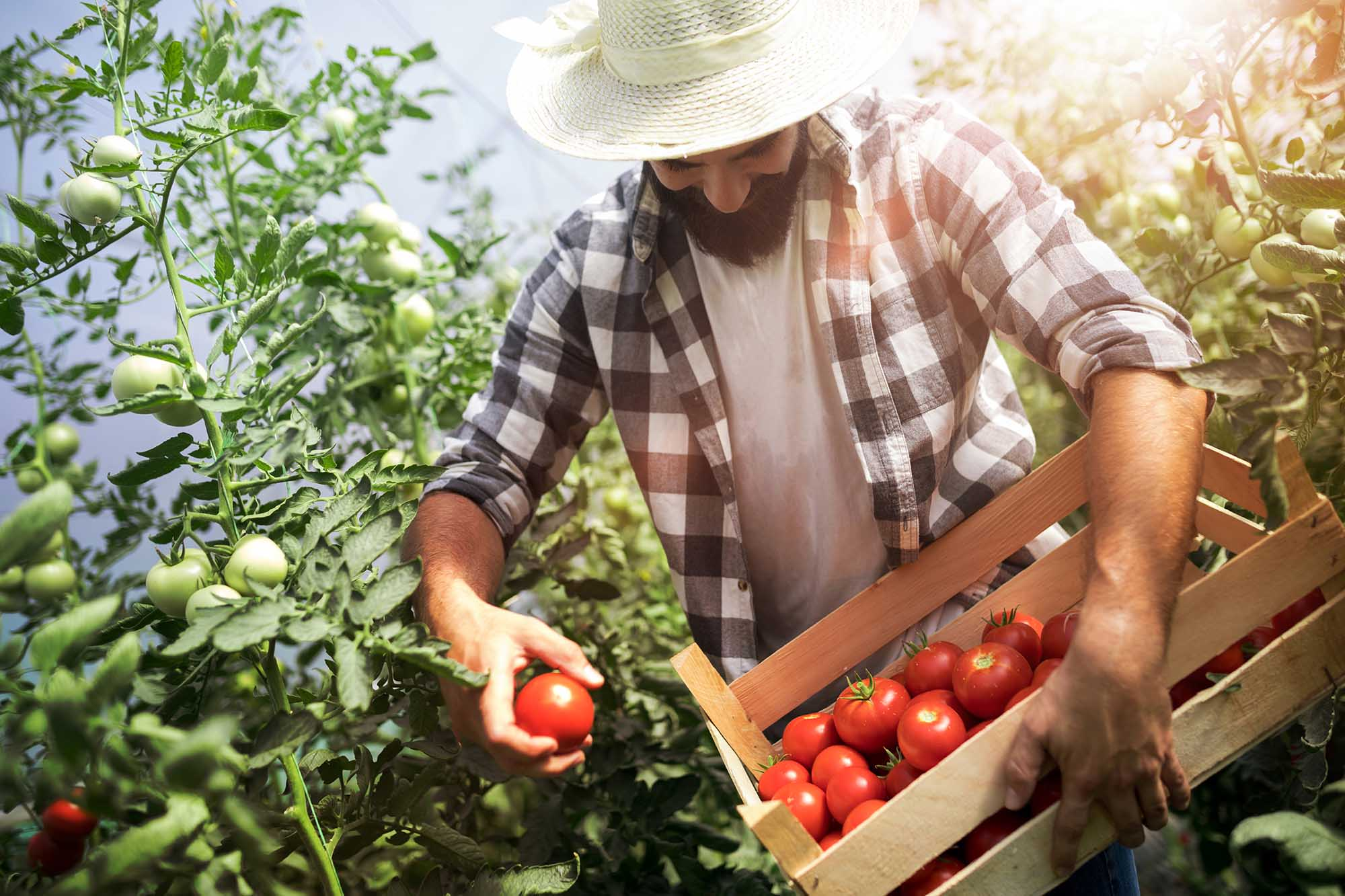 Hub agroalimentario 170920